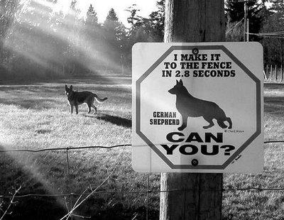 bizar-bord-waarschuwing-voor-snelle-hond