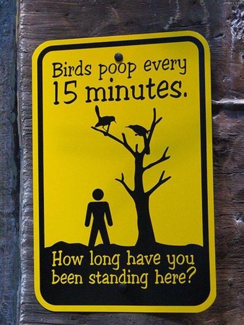 borden-vogels-poepen-elke-vijftien-minuten