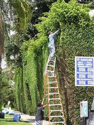 levensgevaarlijke-ladders-1