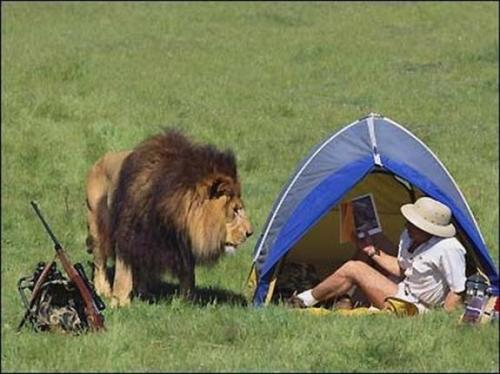 oops-leeuw-op-visite
