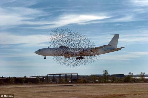 vliegtuig-in-wolk-vogels